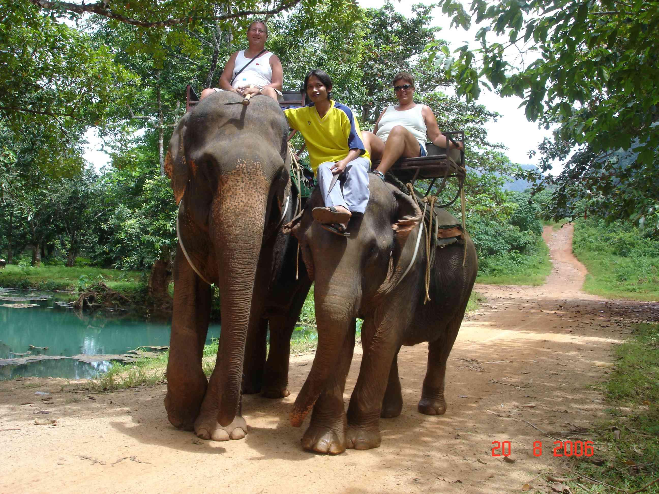 dyreliv i thailand 10 farige dyr