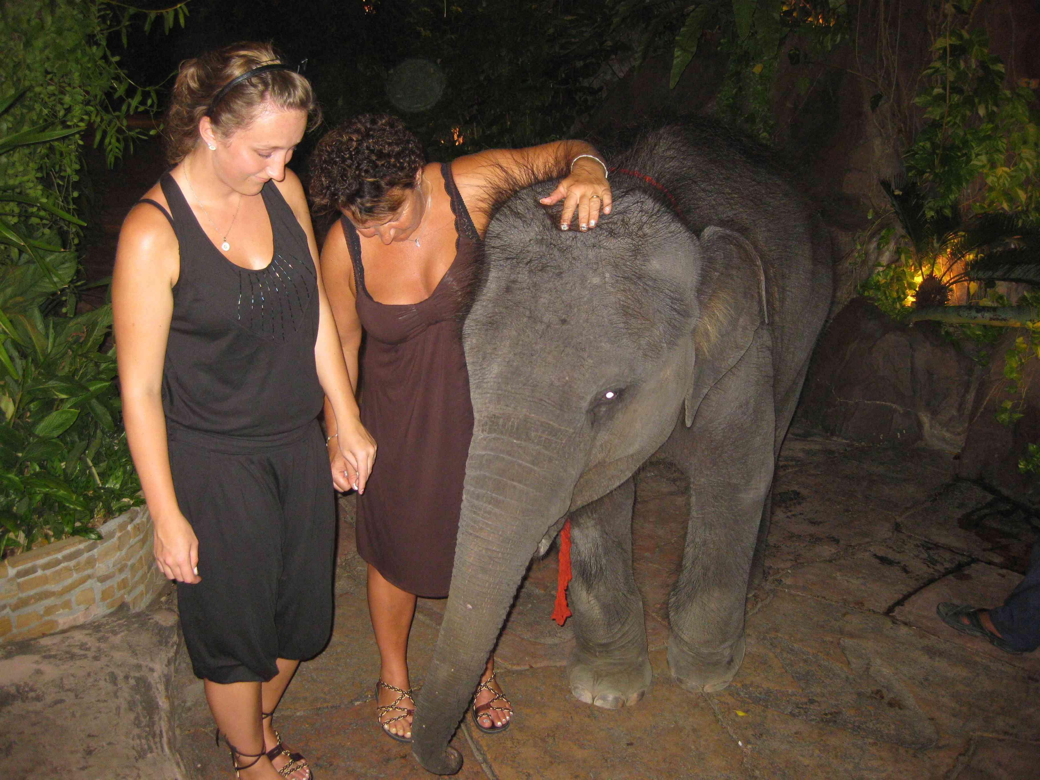 giftige dyr thailand
