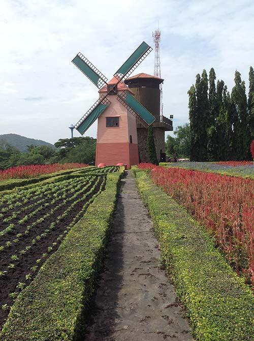 silverlake vineyard windmill 3