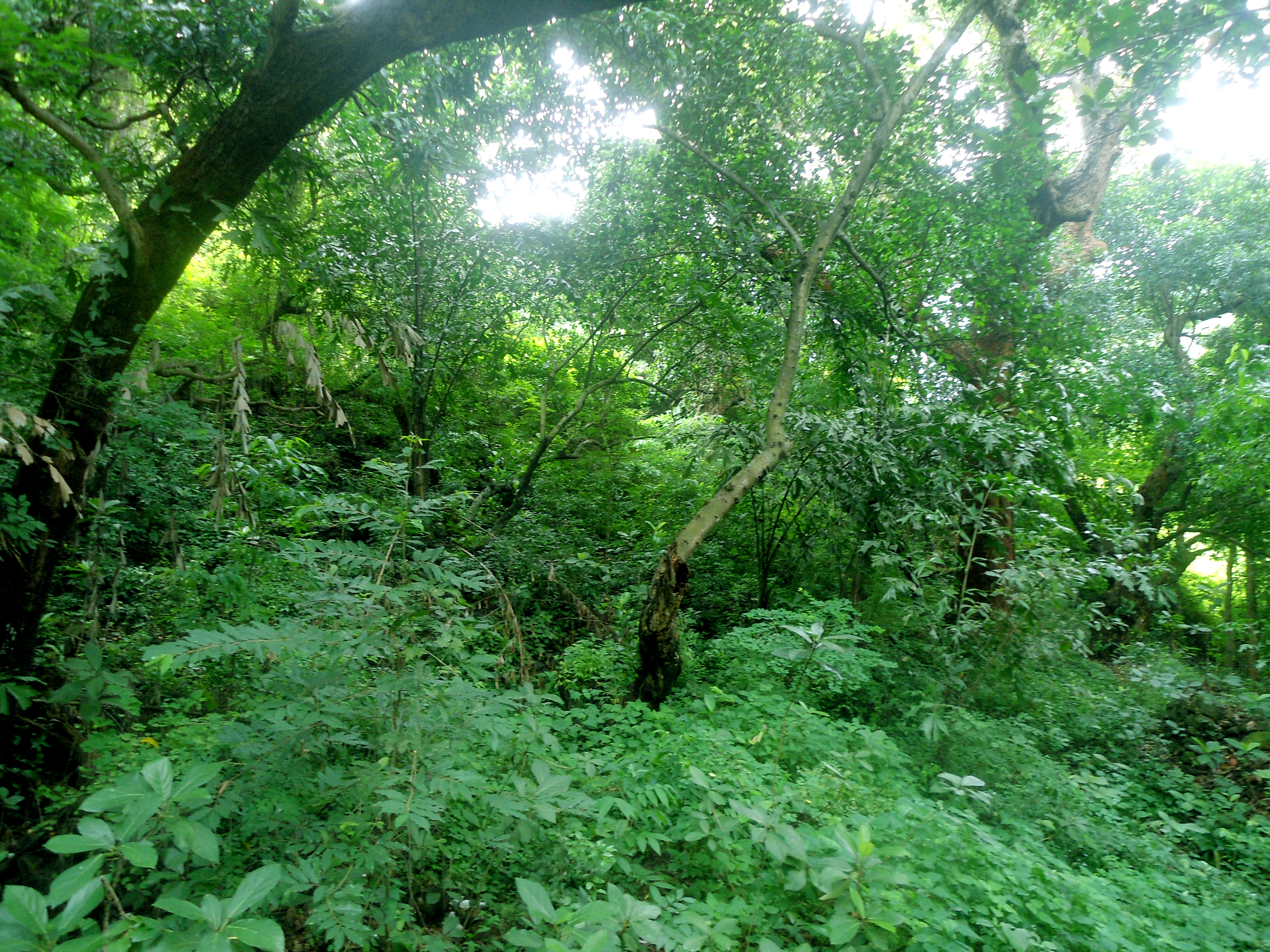 Dry Evergreen Forests during Monsoon at Madhavadhara