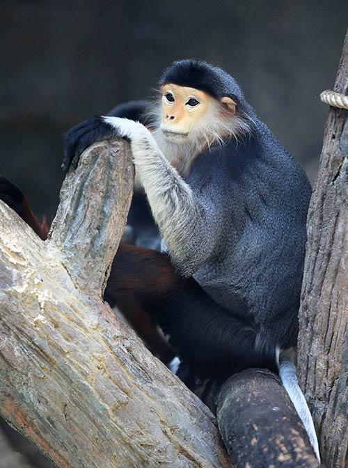 khao kheow open zoo monkey